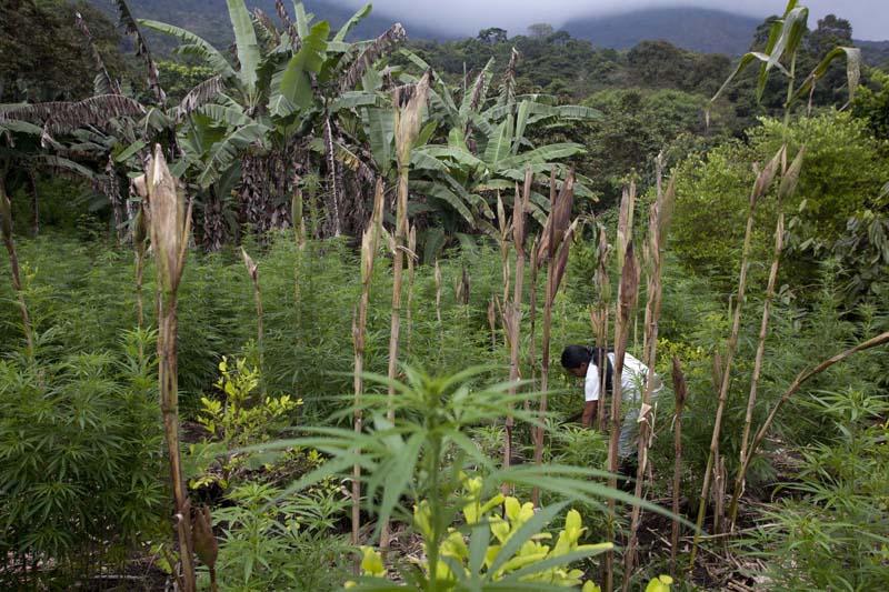 Cauca, Colombia