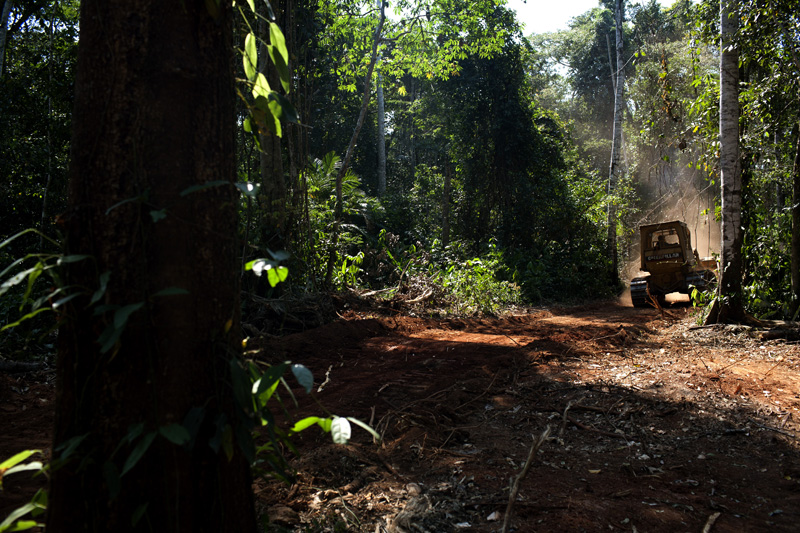 A caterpillar machine clears up jungle for loggers in the Bolivian amazon.