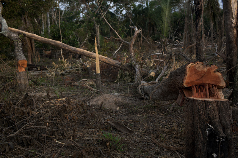 The relentless push to clear-cut trees has given Bolivia the highest rate of Amazonian deforestation.