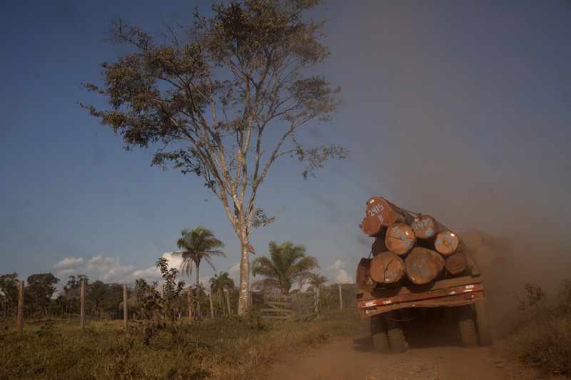 A truck transports logs to the town of Ascencion de Guarayos in the Bolivian Amazon jungle.