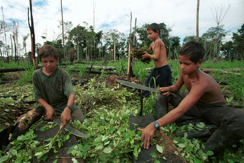 Already skilled with machetes, these children prepare cuttings to plant a new coca field near the hamlet of La Playa, Colombia