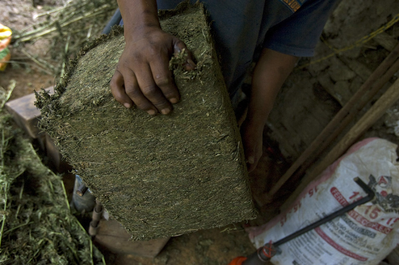 A farmer displays a 25 pound marijuana brick freshly pressed, Cauca, Colombia