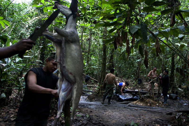 Revolutionary Armed Forces of Colombia, FARC, guerrillas prepare breakfast from the catch of night in the mountains of Meta, Colombia