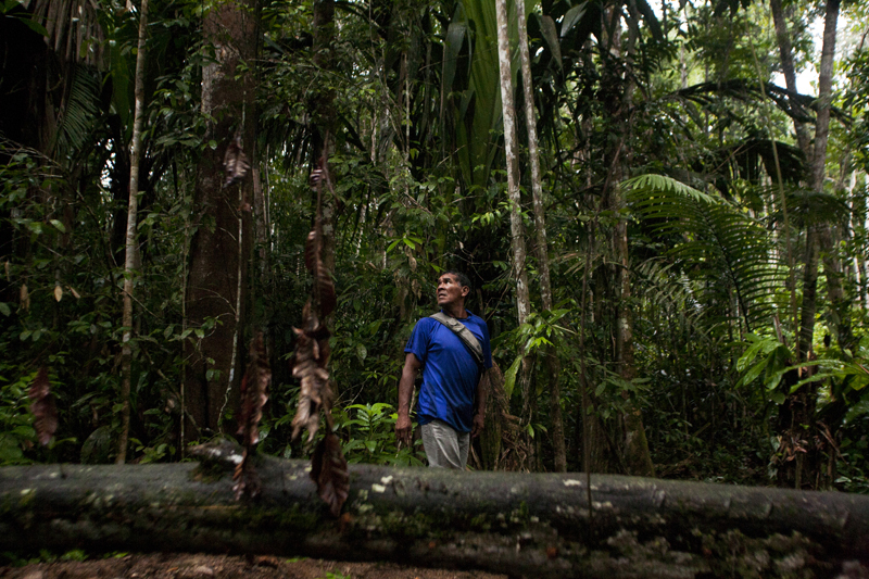 Mr. Pablo Flores, a Curripaco indian, looks at the jungle surrounding him while on a journey to prove that ¨Cerro Timoteo¨actually has a Coltan deposit, Colombia.