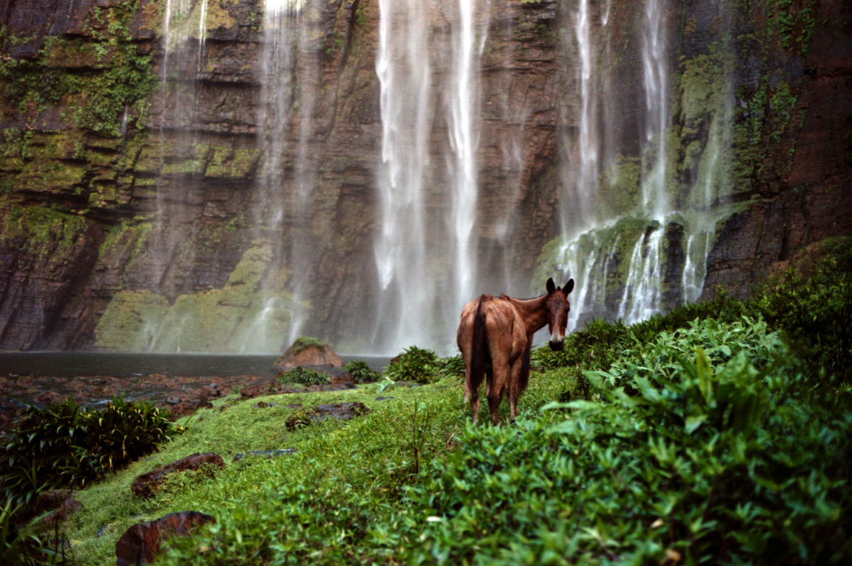 "A mule is seen in ""Salto del Tilupo"" waterfall inside the Katios national park, Colombia, 2008."