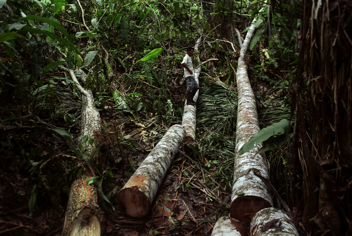 A Tule man stands over logs that will be used to repair his home, Arquia, Colombia, 2010.